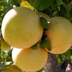 Грейпфруты и гипертония