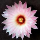 Цветы - путь к здоровью