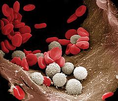 Красота и здоровье по группам крови