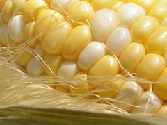 Кукуруза как лекарственное растение