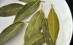 Лечение гайморита отваром лавровых листьев