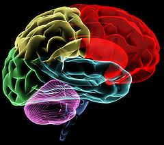 Белковая диета как причина дегенерации головного мозга