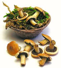 Как вести себя при отравлении грибами?