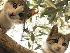 Создана вакцина от аллергии на кошек