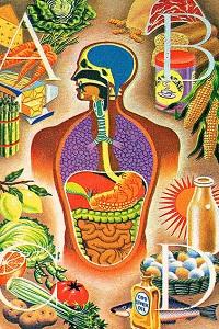 схема кишечника человека