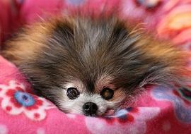 Опасно ли спать с собакой в одной постели?
