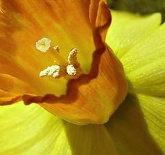 Аллергия на пыльцу. Основные аллергены и симптомы заболевания