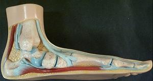 Применение народных методов лечения плоскостопия