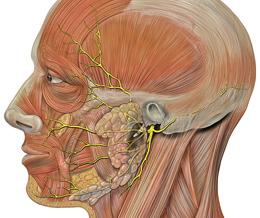 Симптомы и лечение неврита лицевого нерва