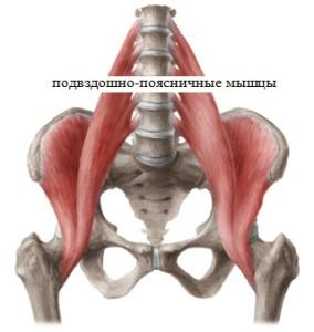 подвздошно-поясничные мышцы