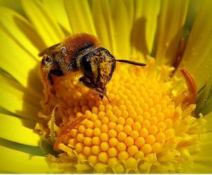Аллергия на пыльцу. Лечение медом