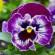 42 вида цветков, которые едят