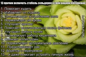 13 полезных свойств черешкового сельдерея
