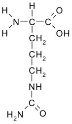 аминокислота цитруллин