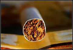 Чайный фильтр для сигарет позволяет уменьшить вред курения