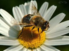Антибактериальные свойства меда связаны с белком самих пчел
