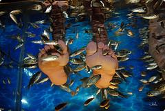 рыбы Garra rufa лечат псориаз