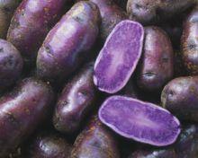 Фиолетовый картофель как лекарство для снижения давления