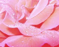 Розовая вода для очищения кожи