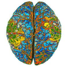 Новые стандарты МРТ позволят ученым найти причины заболеваний мозга