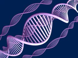 Американские исследователи обнаружили ген – причину бесплодия у женщин