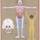 Типы в тибетской медицине