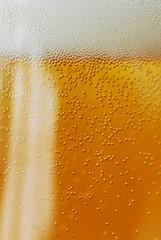 Пиво вместо шампуня