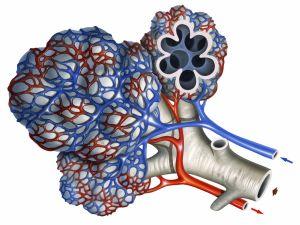 Экзогенный аллергический альвеолит. Причины возникновения, симптомы, лечение