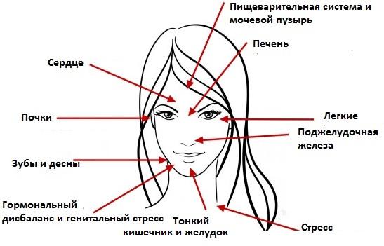 На болезни каких органов указывает акне в той или иной части лица?