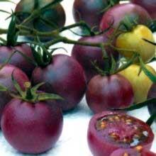 фиолетовый томат