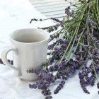 Польза и вред лавандового чая: рецепты заваривания