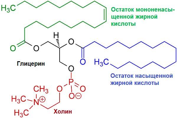 молекула лецитина